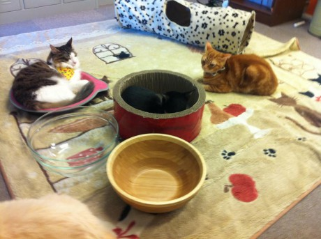 猫カフェを英語で説明したいんですが、